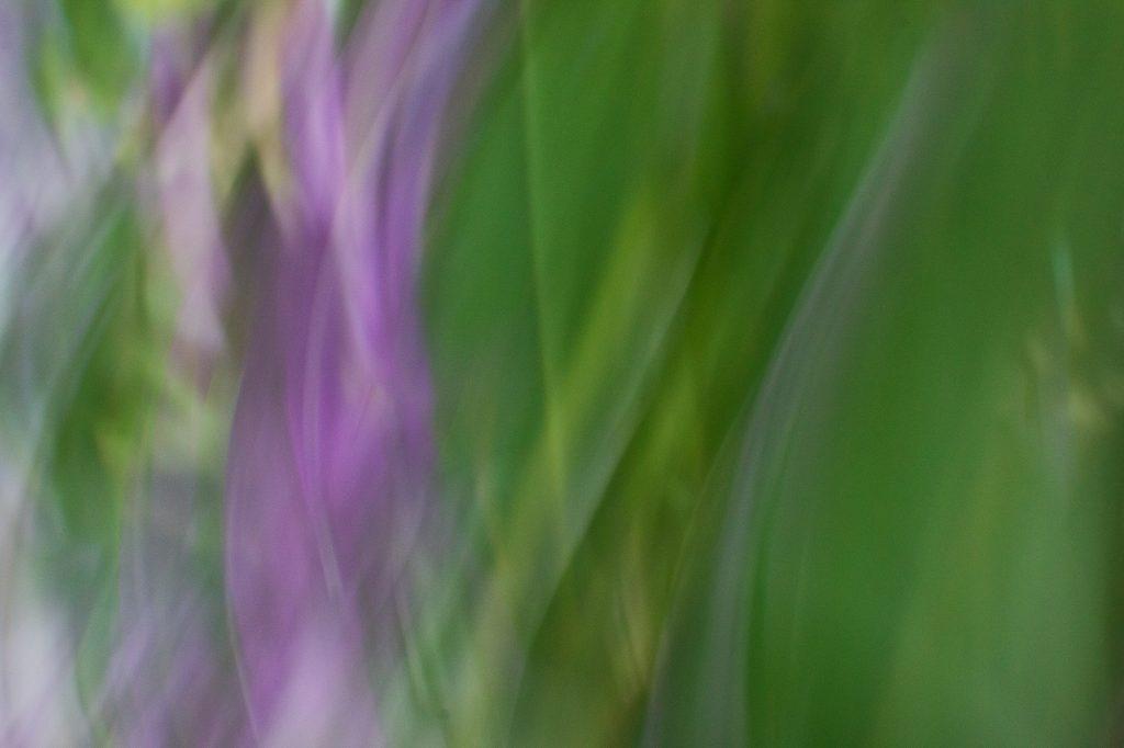 Twisted Purple by Roxanne Darling